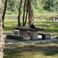Прекрасное место для пикника :: Евгений Зубков