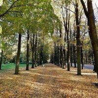 В парке. :: Виктор Егорович