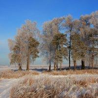 Снежность :: Нэля Лысенко