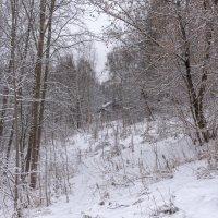Дом в лесу. :: Владимир Безбородов