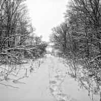 В лес навигатор с собой захватил.. Маршрут проложил.. Зря, жена короче знает дорогу..:) :: Андрей Заломленков