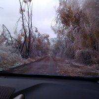 После ледяного дождя :: Евгений Зубков