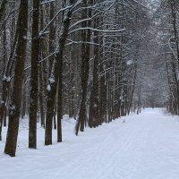 Снег идет :: Наталья Кузнецова