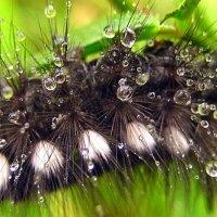 После дождя. :: оля san-alondra