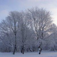 Зимняя сказка в Красном селе. :: Ирина ***