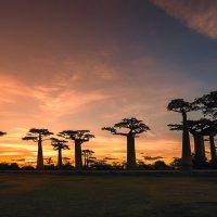 Вечерело...Долина Баобабов, Мадагаскар!!! :: Александр Вивчарик