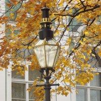 Осень в Питере. :: нина