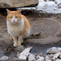 Грелка для уличного кота... :: Сергей Коваленко