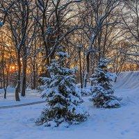Закат в Кремлевском саду :: Наталья Кузнецова