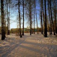 Морозный день . :: Мила Бовкун
