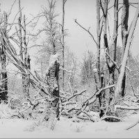 На болоте! :: Владимир Шошин