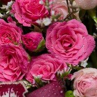 Розовые розы :: Александр Синдерёв