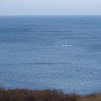 Белый катер на просторах Балтийского моря... :: Маргарита Батырева