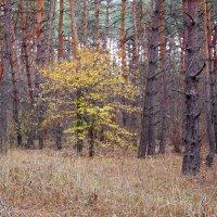 осень :: Александр Борисович