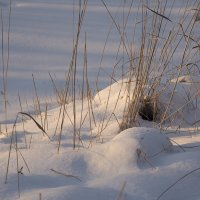 Трава под снегом :: юрий Амосов