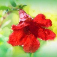 flower grenade :: alexandr lin
