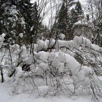 Зима во Всеволожске :: Ирина ***