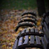 Осенние листья :: Eddy Foto