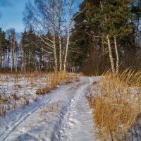 Зима все таки пришла 2 :: Андрей Дворников