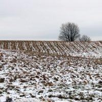 Зима. :: Нина Бурченкова.