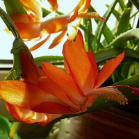 Зимние бабочки на окне. :: Farin Алёна