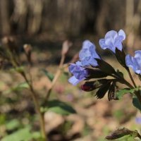 Цветы :: Александр Титков