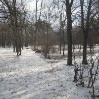 У нас выпал первый снег! :: Галина