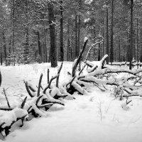 Жизнь леса! :: Владимир Шошин