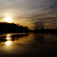 Жёлтая вода :: Дина Дробина