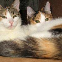 Мама кошка с кошкой дочкой :: OLLES