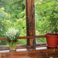 За моим окном лето. :: венера чуйкова