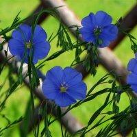 Цветы июня,как вы хороши ! :: Татьянка *