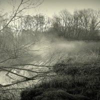 Утро после бури... :: Пётр Галилеев