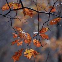 Осенний этюд :: Roman Mordashev