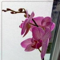 украшение зимнего окна :: maxim