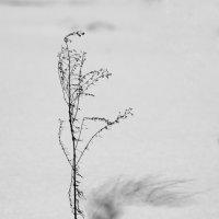 Графика зимы :: Андрей Михайлин