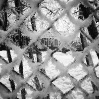Зима :: Юлия Никитина