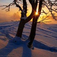 Привет от января... :: Алексей Белик