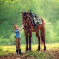 Ярме с конём :: Татьяна Бурыкина