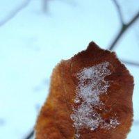 яблоневый листок на фоне первого снега :: Maryana Petrova