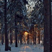 Владения Зимы :: Ольга