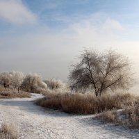 Морозный солнечный  денёк :: Dr. Olver ( ОлегЪ )