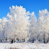 Контрасты зимних красок :: Полина Потапова
