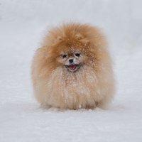 Зимнее солнышко :: Дмитрий .