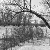 Дерево на берегу. :: юрий Амосов
