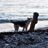 Собака у якоря :: Виктория Попова