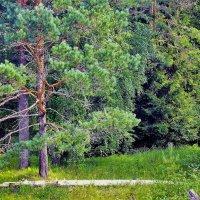 Пятьдесят оттенков зелёного... :: Sergey Gordoff