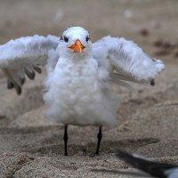 сушка или проветривание перьев :: Naum