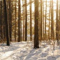 В морозное утро... :: Татьяна Шторм