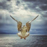 """Медитация (Из серии """"Никогда не учите птиц летать..."""") :: Александр Бойко"""